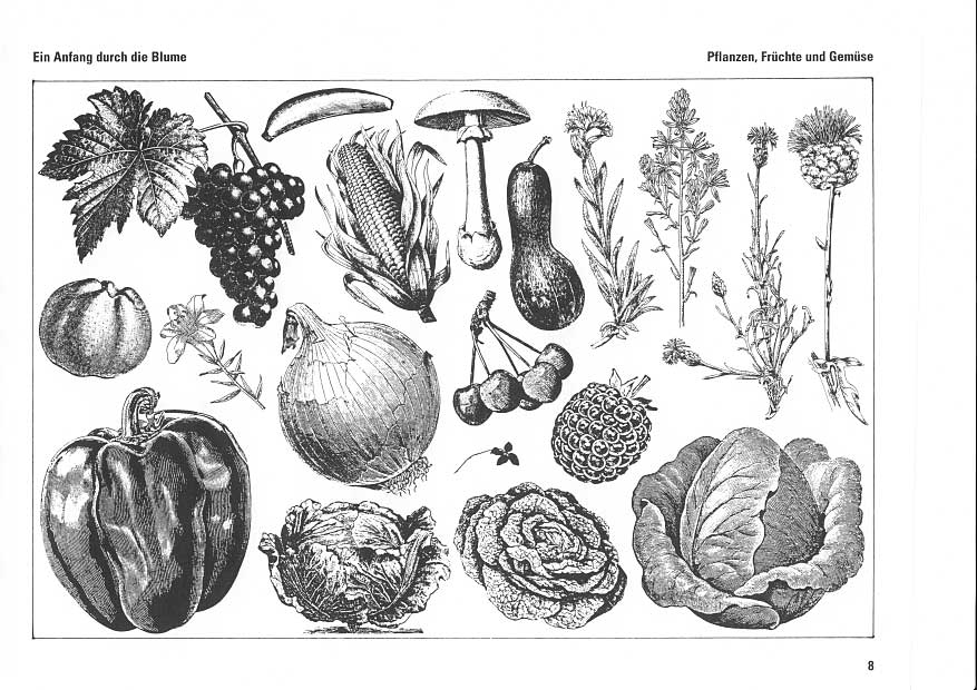 Pflanzen früchte und gemüse traube banane pilz maiskolben